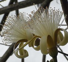 Jamaican Flowering Tree 2 by Mowny