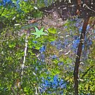 The Leaf in the Reflection by BrianDawson