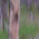 Birch in Early Spring by Lynn Wiles