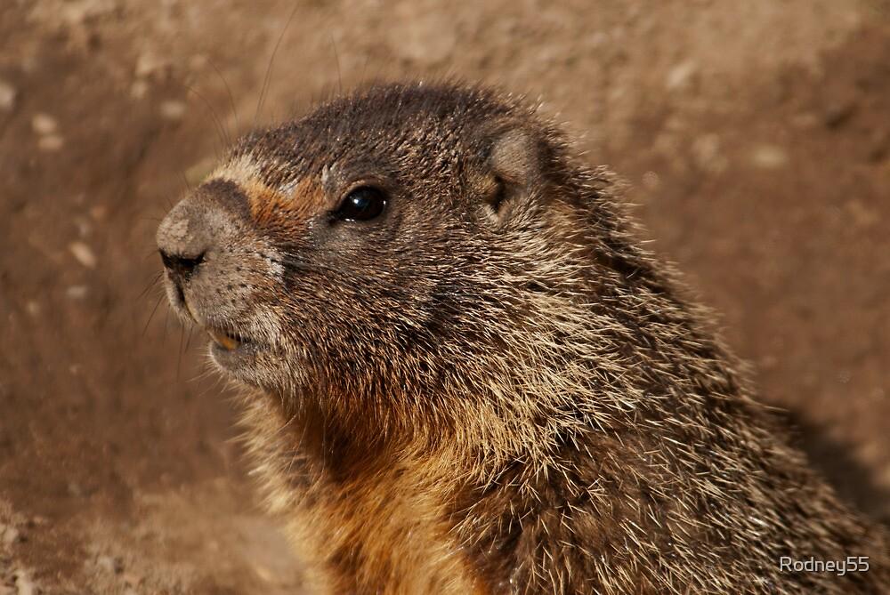 Marmot view by Rodney55
