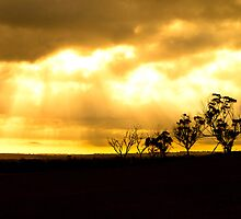 Northam Tree Silhouette by Paul Fulwood