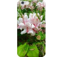 Beautiful Flower iPhone Case/Skin