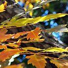 Autumn Splash by Lozzar Flowers & Art