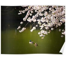 Cherry Blossoms Over A Pond With Ducks Poster