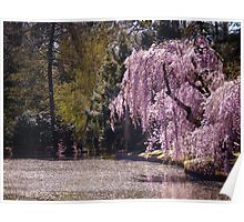 Cherry Blossoms On Trees Next to a Pond Poster