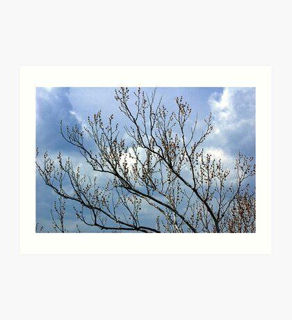 Buds On The Tree Art Print