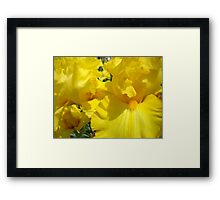 Yellow Irises Flowers art Floral Baslee Troutman Framed Print