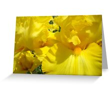 Yellow Irises Flowers art Floral Baslee Troutman Greeting Card