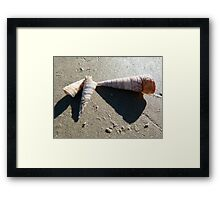 Conical Treasures on Primrose Beach Framed Print