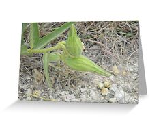 Antelope Horns Seed Pods Greeting Card