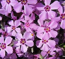Phenomenal Phlox by Debbie Robbins
