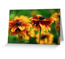 Rubeckia Hirta flowers Greeting Card