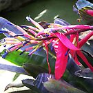 """Cactus Flower"" Botanical Gardens by britt thomson"