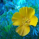 Yellow Flower Botanical Gardens by britt thomson