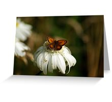 Butterfly on a white flower head Greeting Card
