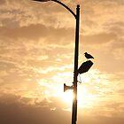 Sea gull_2 by Michael Lucas