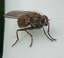 fly (extreme macro) by Lenny La Rue, IPA
