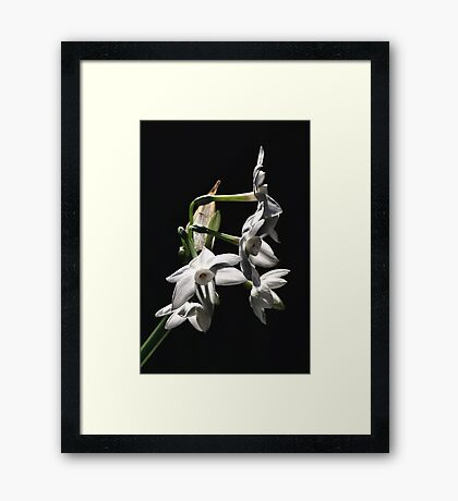 Late Afternoon Glow Framed Print