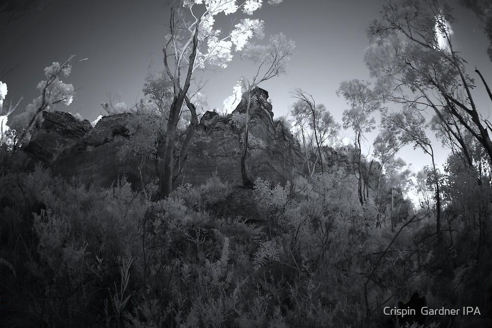 Ancient Land by Crispin  Gardner IPA