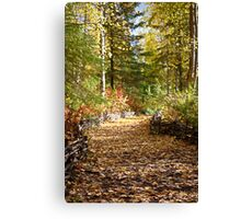Fall in the Woods - Alaska Canvas Print