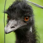 Portrait of an Emu by Helen Barnett