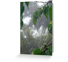 Spider Web in Fruit Tree Greeting Card