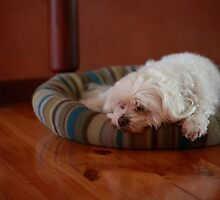 The Hard Life by Patrick Keevil