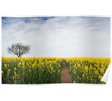 Yellow of Summer - Brassica Napus Poster