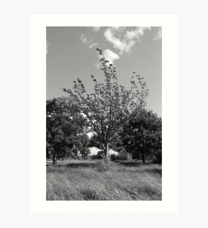 Inland windswept (black & white) Art Print