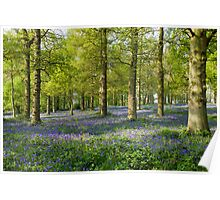 The Bluebell Wood. Poster