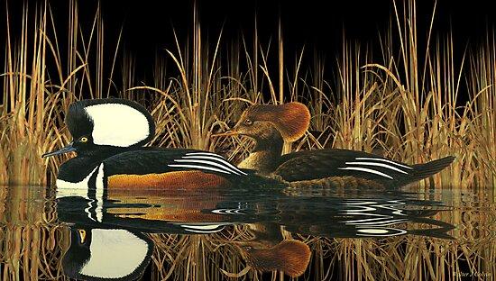 Hooded Meganser Ducks by Walter Colvin
