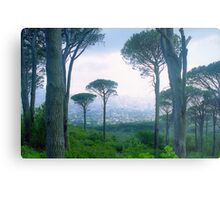 Capetown Trees, South Africa Metal Print