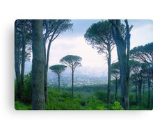 Capetown Trees, South Africa Canvas Print