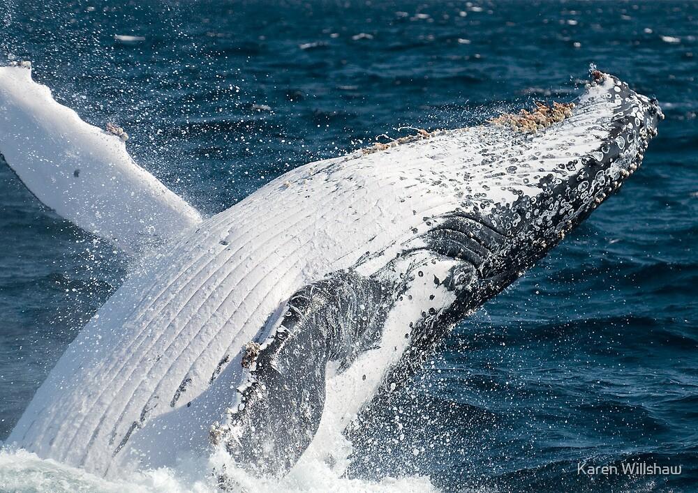 """JOY"" - Humpback Whale Breaching by Karen Willshaw"