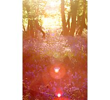 Sunny Bluebells Photographic Print