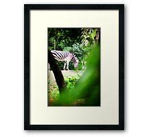 Peek A Boo Zebra Framed Print