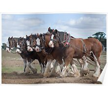 A Team of Six  Clydesdale  Poster