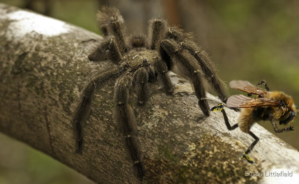 Arachnophobeea by Susan Littlefield