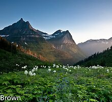 Bear Grass in Glacier National Park by Craig Brown