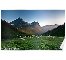 Bear Grass in Glacier National Park Poster