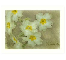 Holding on to Spring Art Print