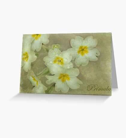 Holding on to Spring Greeting Card