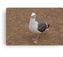 Seagull 1 Canvas Print