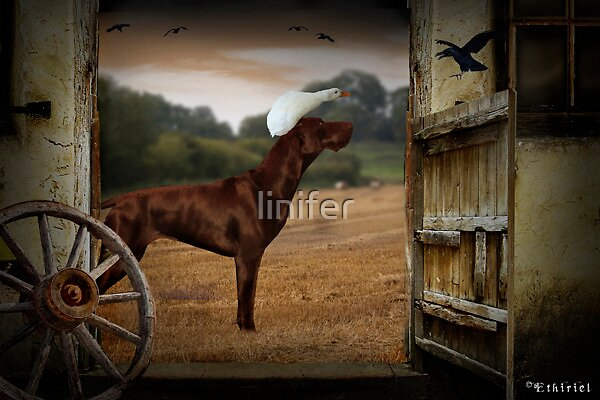 Dog and Duck by linifer
