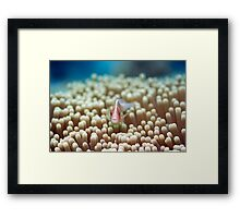 Anemone and Pink clownfish Framed Print