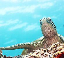 Turtle by MotHaiBaPhoto Dmitry & Olga