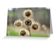 5 Pods Greeting Card
