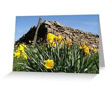 Slightly faded daffodils Greeting Card