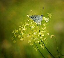 Meadowland by hampshirelady
