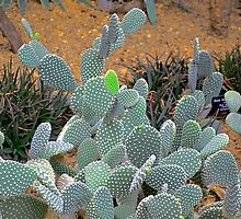 Cactus by Imagery